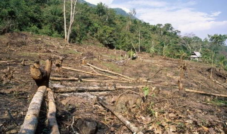Deforestation in the Amazon: Pressures and outlook