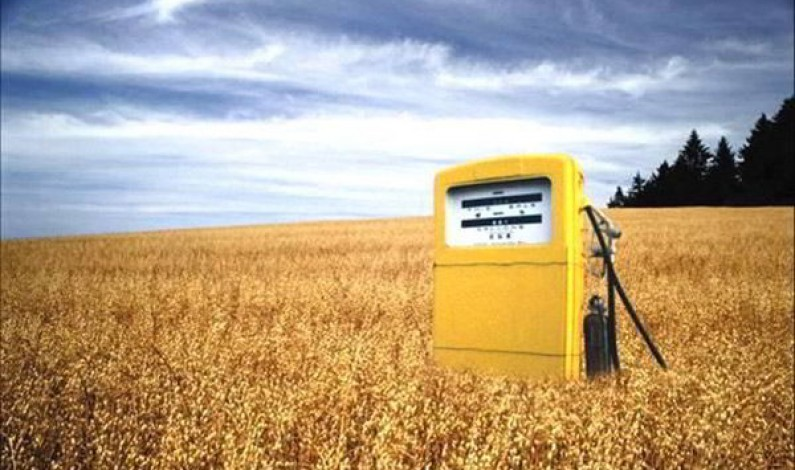 The Debate on Biofuels: Between Food Security and the Price of Oil